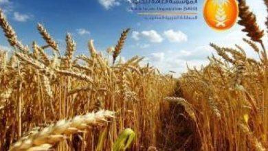 """صورة """"الحبوب"""" تنتهي من ترسية الدفعة الثالثة من القمح المستورد هذا العام"""