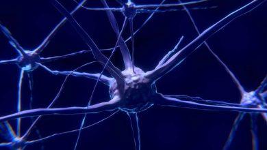 صورة جوجل تساعد في رسم خريطة لأنسجة المخ البشري
