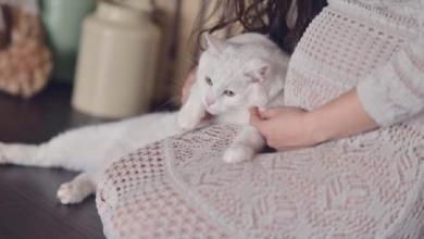 صورة هل القطط المطعمه تضر الحامل أو تسبب العقم للفتيات؟ تعرفوا معنا…