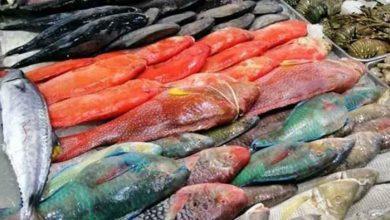 صورة أفضل أنواع السمك في السعودية للشوي والقلي في جدة والخليج العربي 2021