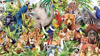 المجموعة الكبرى التي تصنف بها المخلوقات الحية