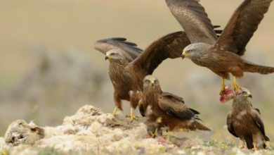 تساعد العظام المجوفه للطيور على