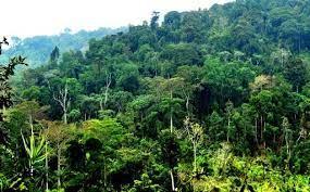 نباتات الغابات لها أوراق كبيرة تساعدها على التخلص من الماء الزائد