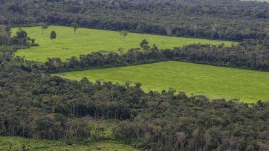 فيسبوك تحارب بيع أراضي غابات الأمازون عبر سوقها